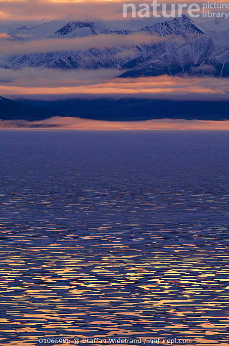 Midnight sun reflections on sea, Baffin Island, Nunavut, Canada. May  ,  ARCTIC,LANDSCAPES,MARINE,NIGHT,VERTICAL,North America,CANADA  ,  Staffan Widstrand
