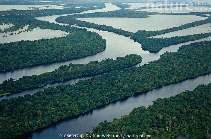 Anavilhanas archipelago, meandering Amazon river, Amazonias, Brazil., AERIAL,ISLANDS,LANDSCAPES,RIVERS,TREES,TROPICAL RAINFOREST,WATER,WETLANDS,Plants,SOUTH-AMERICA, Staffan Widstrand