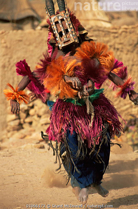 Dogon masked dancers, Mali, West Africa, AFRICA,CLOTHING,CULTURES,DANCING,FESTIVALS,NORTH AFRICA,PEOPLE,TRADITIONAL,TRIBAL,TRIBES,VERTICAL,WEST AFRICA,NORTH-AFRICA, Grant McDowell