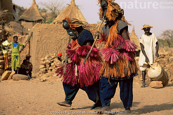 Dogon masked dancers, Mali, West Africa, AFRICA,CLOTHING,CULTURES,DANCING,FESTIVALS,NORTH AFRICA,PEOPLE,TRADITIONAL,TRIBAL,TRIBES,WEST AFRICA,NORTH-AFRICA, Grant McDowell