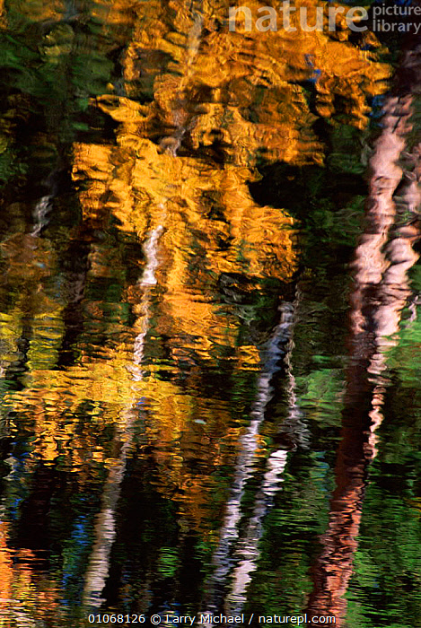 Autumn trees reflected in water, USA, MICHAEL,REFLECTIONS,USA,LAWRENCE,AUTUMN,LM,VERTICAL,TREES,WATER,NORTH AMERICA,PLANTS, Larry Michael