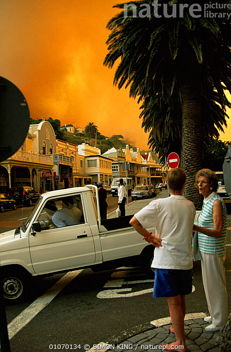 Bush fire at Simon's Town, South Africa. Evacuation of residents  ,  AFRICA,CITIES,FLAMES,PEOPLE,ROADS,SOUTHERN AFRICA,URBAN,VEHICLES,VERTICAL  ,  SIMON KING