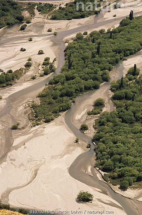 Aerial view of river with introduced Willow and Poplar trees, Arrowtown, New Zealand  ,  AERIALS,AUSTRALASIA,LANDSCAPES,NEW ZEALAND,RIVERS,TREES,VERTICAL,Plants  ,  Martin Dohrn