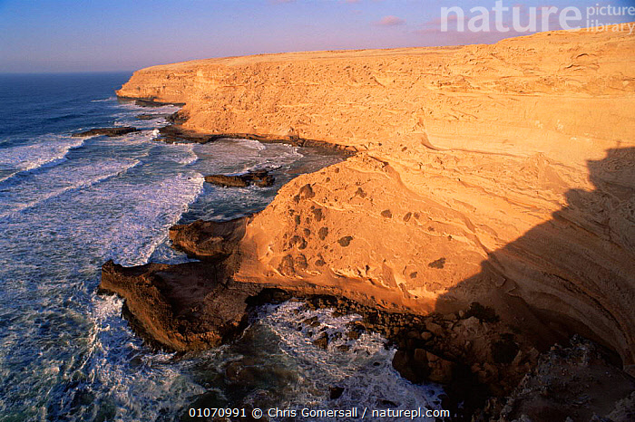 Sea cliffs of Souss Massa NP, breeding site for Bald ibis, Morocco  ,  AFRICA,BIRDS,BREEDING,CLIFFS,COASTAL WATERS,COASTLINE,COASTS,LANDSCAPES,MARINE,NORTH AFRICA,RESERVE,SEA,SEABIRDS,WAVES,Geology,NORTH-AFRICA  ,  Chris Gomersall