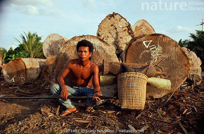 Sakai hunter sits by timber logs in rainforest, Riau, Sumatra, Indonesia  ,  ASIA,DARIO,DEFORESTATION,DNV,FORESTERY,HORIZONTAL,HUNTER,HUNTING FOOD,LOGGERS,LOGS,NOVELLINO,PEOPLE,RAINFOREST,RIAU,SAKAI,SOUTH EAST ASIA,TIMBER,TRIBES,TROPICAL RAINFOREST,SOUTH-EAST-ASIA,INDONESIA  ,  Dario Novellino