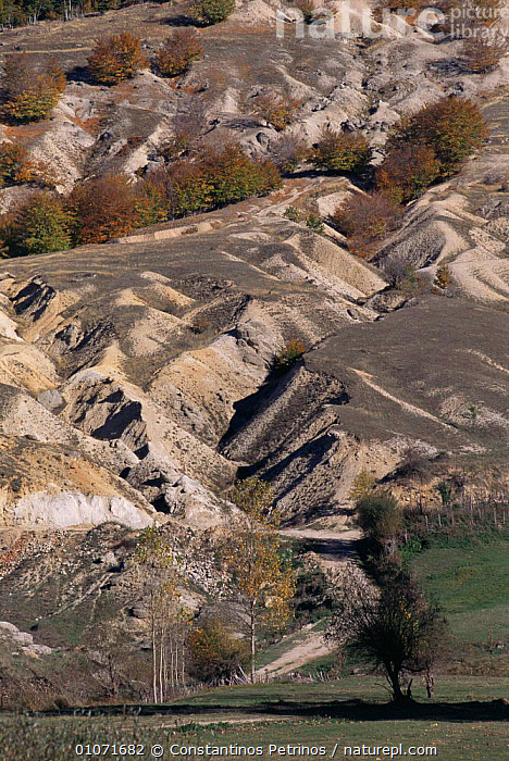 Soil erosion on hillside due to deforestation and overgrazing, Nympheon Mountains, Northern Greece  ,  AUTUMN,damage,DEFORESTATION,ENVIRONMENTAL,EROSION,EUROPE,GREECE,LANDSCAPES,SOIL,TREES,unstable,VERTICAL,Plants  ,  Constantinos Petrinos