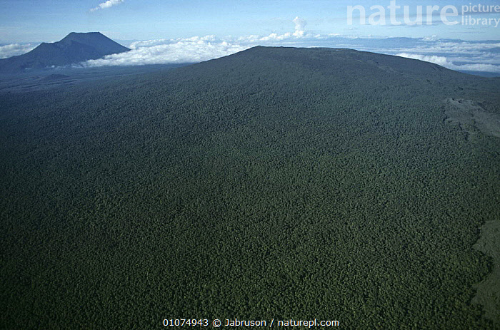 Aerial view of tropical rainforest established on old lava flow of Nyiragongo volcano, Virunga NP, Democratic Republic of Congo (formerly Zaire) Central Africa  ,  AERIALS,AFRICA,CANOPY,CENTRAL AFRICA,CLOUDS,HABITAT,HIGHLANDS,LANDSCAPES,NP,OLD,PLANTS,TREES,TROPICAL,TROPICAL RAINFOREST,VOLCANIC,VOLCANOES,Weather,Geology,National Park , Bruce Davidson  ,  Jabruson