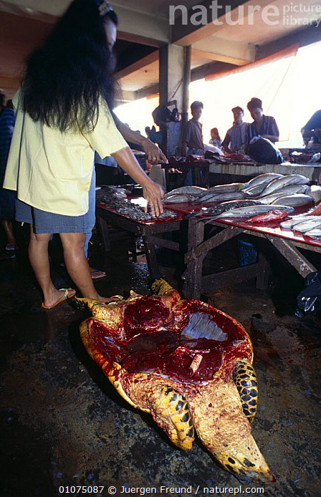 Sea turtle meat for sale in fish market, Indonesia 1997  ,  ASIA,FISH,FOOD,INDONESIA,MEAT,PEOPLE,REPTILES,SOUTH EAST ASIA,TRADE,TURTLES,VERTICAL,SOUTH-EAST-ASIA  ,  Jurgen Freund