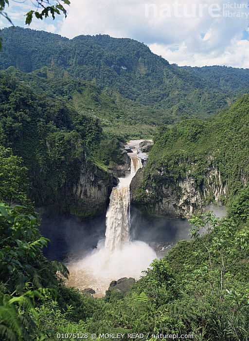 Aerial view of San Rafael falls, Rio Quijos, Ecuador  ,  LANDSCAPES,SOUTH AMERICA,TROPICAL RAINFOREST,VERTICAL,WATERFALLS,SOUTH-AMERICA  ,  MORLEY READ