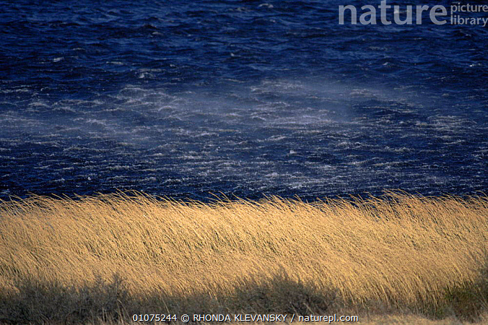 Wind blowing across lake and through grass, Torres del Paine NP, Chile  ,  GRASS,GRASSLAND,LAKES,LANDSCAPES,NP,RESERVE,SOUTH AMERICA,WATER,WAVES,WEATHER,WIND,WINDY,Plants,National Park,SOUTH-AMERICA  ,  RHONDA KLEVANSKY