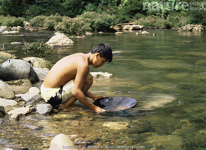 Panning for gold in Rio Pusuno, Napo-Galeras NP, Ecuador  ,  MINERALS,PEOPLE,RESERVE,RIVERS,SOUTH AMERICA,TRADITIONAL,TROPICAL RAINFOREST  ,  MORLEY READ