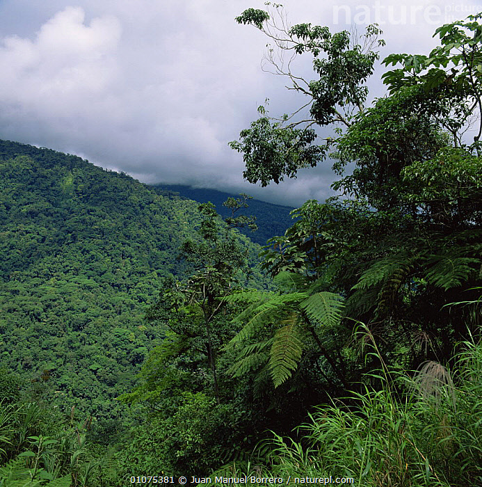 Looking out over tropical rainforest canopy, Braulio Carrillo NP, Costa Rica  ,  CANOPY,CENTRAL AMERICA,CLOUDS,FORESTS,HIGHLANDS,LANDSCAPES,NP,RESERVE,TREES,TROPICAL,TROPICAL RAINFOREST,Weather,Plants,National Park  ,  Juan Manuel Borrero