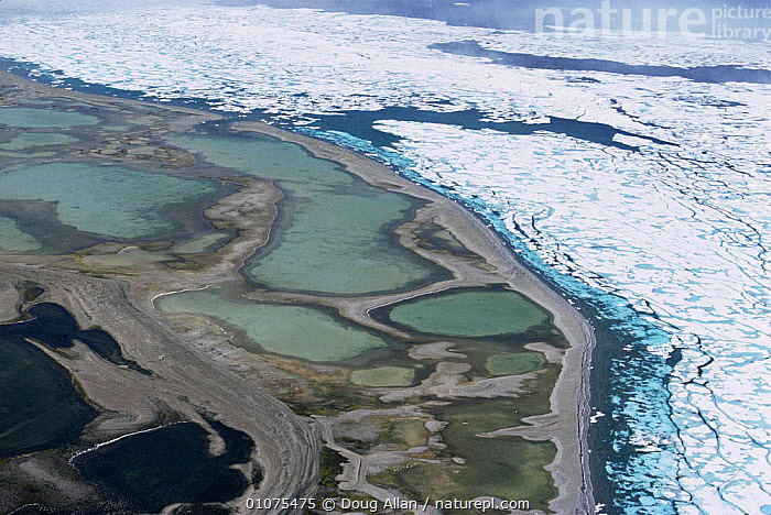 Aerial view of freshwater pools on the shoreline of the melting sea, Devon Island, Canadian Arctic  ,  AERIALS,ARCTIC,COASTAL WATERS,COASTS,FRESHWATER,ICE,LANDSCAPES,MARINE,MELTING,NORTH AMERICA,POLAR,SEA,WATER  ,  Doug Allan