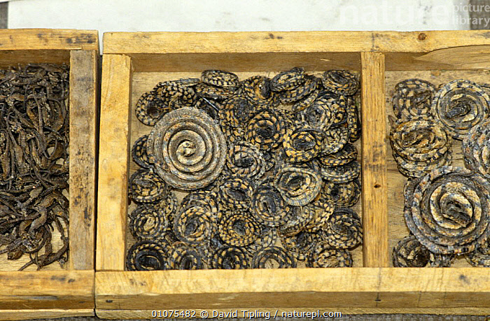 Dried snakes on sale for medicine purposes, Beijing, China  ,  ASIA,CHINA,CULTURES,DRIED,MARKETS,MEDICINE,REPTILES,SNAKES,TRADE,TRADITIONAL  ,  David Tipling