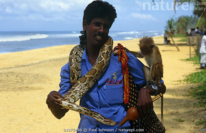Tourist attraction, man with python and monkey on beach, Vialutra region, Sri Lanka  ,  ASIA,BEACHES,CAPTIVE,CAPTIVITY,COASTS,CRUELTY,INDIAN SUBCONTINENT,MAMMALS,MAN,PEOPLE,PRIMATES,REPTILES,SNAKES,TOURISM,TRADE,INDIAN-SUBCONTINENT  ,  Paul Johnson