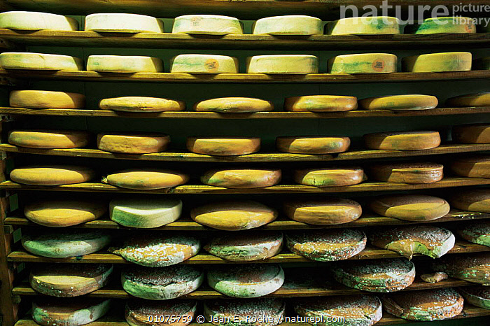 Cheeses stored at local cheese farm, Haut Jura, France  ,  alps,EUROPE,FRANCE,PATTERNS,TRADITIONAL  ,  Jean E. Roche