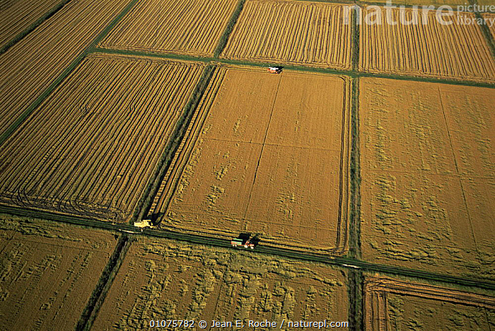 Aerial view of Rice fields being harvested, Camargue, France  ,  AERIALS,CROPS,EUROPE,FRANCE,HARVESTING,HORIZONTAL,LANDSCAPES,PATTERNS,VEHICLES,WETLANDS  ,  Jean E. Roche