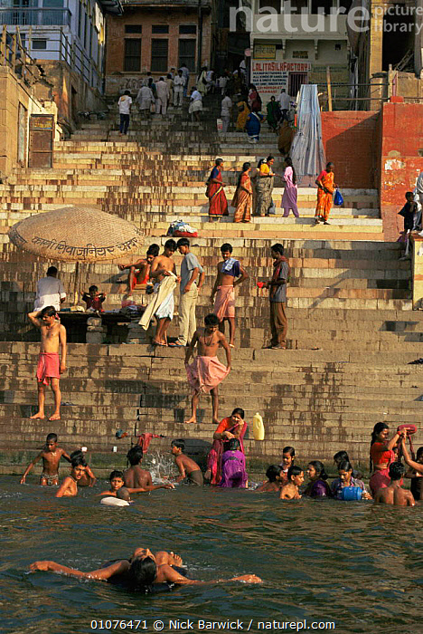 Daily life on the Ghats besides the holy Ganges, Varanesi / Benares, Uttar Pradesh, India  ,  ASIA,BATHING,CITIES,CULTURES,ghats,GROUPS,holy,INDIAN SUBCONTINENT,PEOPLE,pilgrimage,RIVERS,sacred,SWIMMING,VERTICAL,WATER,INDIAN-SUBCONTINENT  ,  Nick Barwick