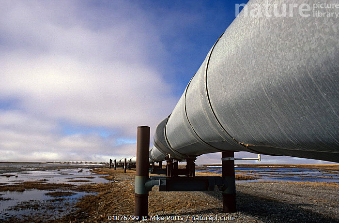 Trans Alaska oil pipeline Prudhoe Bay, Alaska, USA 1988  ,  COASTS,CRUDE OIL,ENERGY,HORIZONTAL,INDUSTRY,LANDSCAPES,NORTH AMERICA,TUNDRA,USA,WETLANDS  ,  Mike Potts