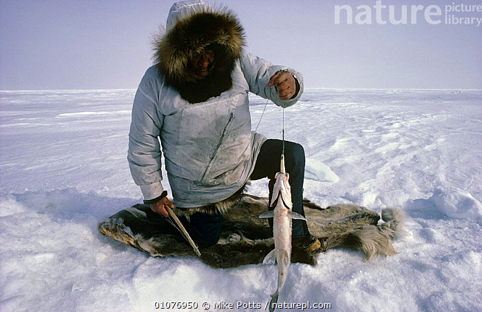 Fishing through ice hole Selawick Lake, Alaska, USA 1988  ,  ARCTIC,FISH,FUR,HORIZONTAL,ICE,NORTH AMERICA,PEOPLE,SKIN,TRADITIONAL,USA  ,  Mike Potts