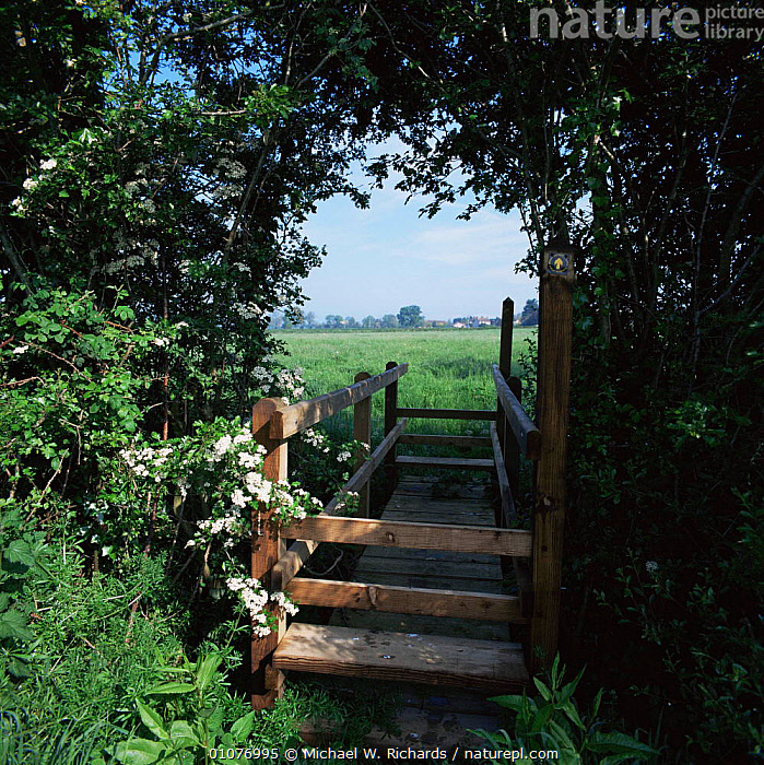 Footpath bridge over stream, Nr Glastonbury Somerset, UK.  ,  COUNTRYSIDE,ENGLAND,Footpaths,HEDGEROWS,UK,VERTICAL,walking,Europe,United Kingdom,British  ,  Michael W. Richards