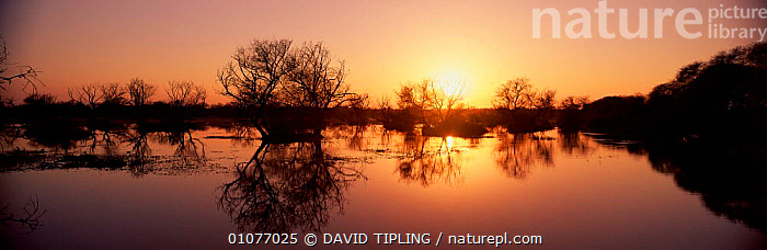 Lake in Bharatpur National Park at sunset, Rajasthan, India  ,  INDIAN SUBCONTINENT,LAKES,LANDSCAPES,PANORAMIC,REFLECTIONS,RESERVE,WETLANDS,Asia,INDIAN-SUBCONTINENT,INDIA,,UNESCO World Heritage Site,  ,  DAVID TIPLING