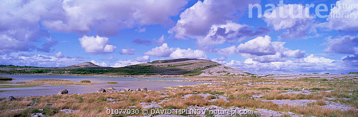Mullach mor limestone pavement and turlough, The Burren, County Clare, Ireland / Eire  ,  COASTS,EUROPE,LANDSCAPES,NP,PANORAMIC,RESERVE,ROCK FORMATIONS,Geology,National Park  ,  DAVID TIPLING