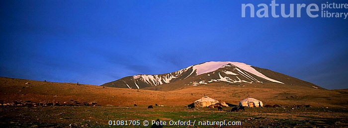Kazakh gers / yurt with livestock in landscape. Tsengel Khairkhan Mtn, W Mongolia Eagle hunters -  ,  ASIA,GRASSLAND,HOMES,HORIZONTAL,LANDSCAPES,LIVESTOCK,MAMMALS,MONGOLIA,MOUNTAINS,NOMADIC,PANORAMIC,TENTS,TRADITIONAL,TRIBES  ,  Pete Oxford