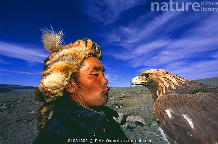 Kazakh nomad with Golden eagle {Aquila chrysaetos} trained for hunting, Tsengel Khairkhan mountains, W Mongolia  ,  BIRD,BIRDS,BIRDS OF PREY,HUNTING,HUNTING FOOD,KAZAKHS,MAN,NOMAD,PEOPLE,PO,PORTRAITS,TRADITIONAL,WORKING,ASIA  ,  Pete Oxford