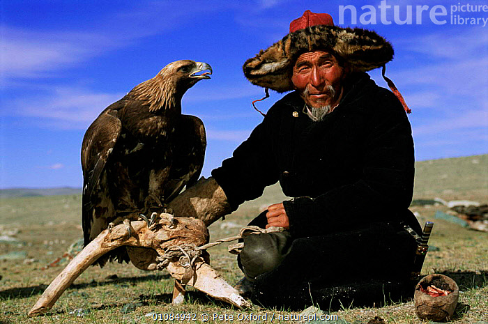 Kazakh nomad with Golden eagle for hunting {Aquila chrysaetos} Tsengel Khairkhan mts, Mongolia  ,  BIRDS,BIRDS OF PREY,GRASSLAND,HUNTING,HUNTING FOOD,KAZAKH,KHAIRKHAN,MAN,NOMAD,ONE,OXFORD,PEOPLE,STEPPE,TRADITIONAL,TRIBES,TSENGEL,WORKING,ASIA  ,  Pete Oxford