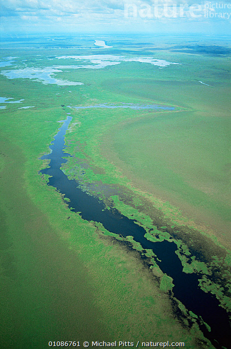 Aerial view of old course of Kazawari river, Papua New Guinea  ,  AERIALS,ASIA,GRASSLAND,GREEN,HABITAT,LANDSCAPES,PAPUA NEW GUINEA,RIVERS,SOUTH EAST ASIA,VERTICAL,WETLANDS,WEST-AFRICA  ,  Michael Pitts