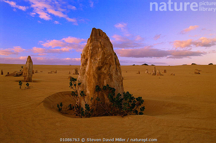 The Pinnacles, remnant columns in an eroded limestone plateau, Nambung NP, Western Australia  ,  35,COLUMNS,DAVID,DESERT,DESERTS,ERODED,GEOLOGY,HORIZONTAL,LANDSCAPES,LIMESTONE,MILLER,NAMBUNG,NATIONAL,NATIONAL PARK,NP,PARK,PINNACLES,PLATEAU,REMNANT,ROCK FORMATIONS,SAND,SAND FORMATIONS,SDM,STEVEN,WEST,WESTERN AUSTRALIA  ,  Steven David Miller