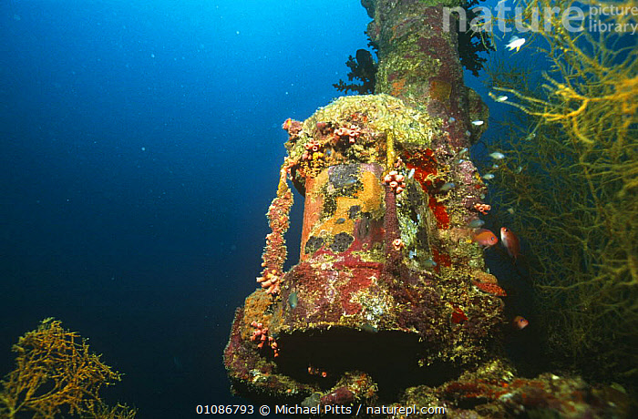 Mast light of Japanese WWII ship, which has formed an artificial reef in the Marovo lagoon, Solomon Islands  ,  BOATS,COLOURFUL,CORAL REEFS,HORIZONTAL,INVERTEBRATES,MARINE,OCEANIA,PACIFIC,PACIFIC OCEAN ISLANDS,TROPICAL,UNDERWATER,Anthozoans, Cnidaria,MELANESIA, Cnidaria, Cnidaria, Cnidaria, Cnidaria, Cnidaria,Catalogue1  ,  Michael Pitts
