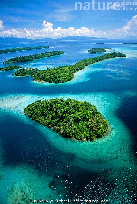 Aerial view of islands with fringing coral reefs, New Georgia, Solomon Islands, Pacific Ocean  ,  AERIAL,CORAL,CORAL REEFS,FRINGING,TREES,GEOLOGY,ISLANDS,LANDSCAPES,PACIFIC,REEFS,TROPICAL,VERTICAL,MARINE,SKY ,AERIALS,Plants,MELANESIA,Catalogue1  ,  Michael Pitts