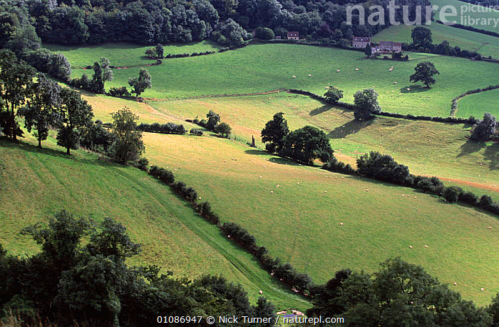 Farmland landscape Cotswolds, Glos, England  ,  BUILDINGS,EUROPE,FARM,FIELDS,HEDGEROWS,LANDSCAPES,SUMMER,TREES,UK,United Kingdom,Plants,British,ENGLAND,GettyBOV  ,  Nick Turner