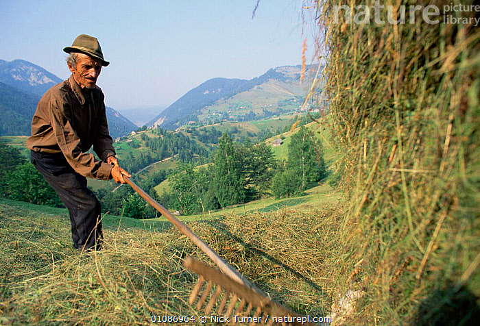 Romanian farmer hay making Zarnesti, Carpathian mountains, Romania.  ,  CROPS,GIRCHIN,HIGHLANDS,HORIZONTAL,LANDSCAPES,PEOPLE,TRADITIONAL,EUROPE  ,  Nick Turner