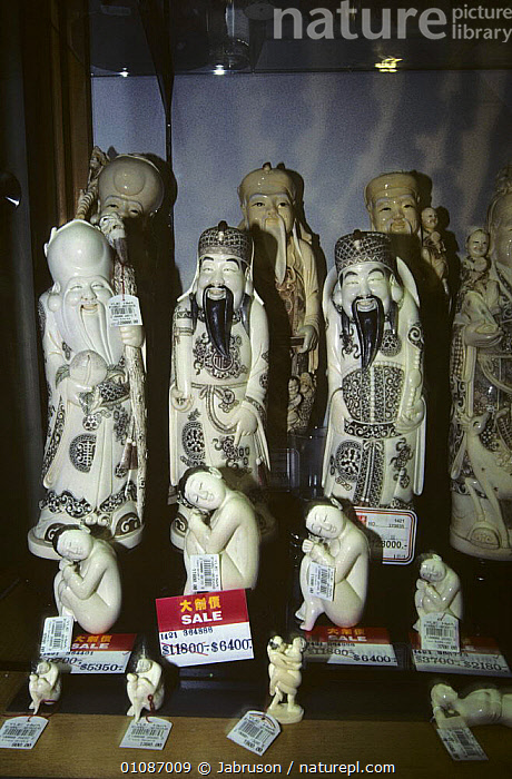 Ivory figures for sale Kowloon, Hong Kong, China  ,  ARTIFACTS,ASIA,CARVING,CHINA,CULTURES,ILLEGAL,SHOPS,TRADE,VENDOR,VERTICAL , Bruce Davidson  ,  Jabruson