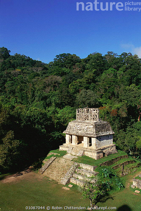Ancient Maya temple at Palenque, Mexico  ,  ANCIENT,ARCHAEOLOGY,BUILDINGS,CENTRAL AMERICA,LANDSCAPES,MAYA,PALENQUE,RC,RUIN,RUINS,SITE,TEMPLE,VERTICAL,CENTRAL-AMERICA  ,  Robin Chittenden