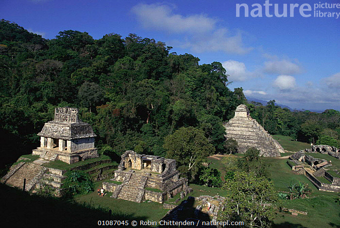 Ancient Maya temples at Palenque, Mexico  ,  ANCIENT,ARCHAEOLOGY,BUILDINGS,CENTRAL AMERICA,HORIZONTAL,LANDSCAPES,PALENQUE,RC,RUIN,TEMPLE,TEMPLES,CENTRAL-AMERICA  ,  Robin Chittenden