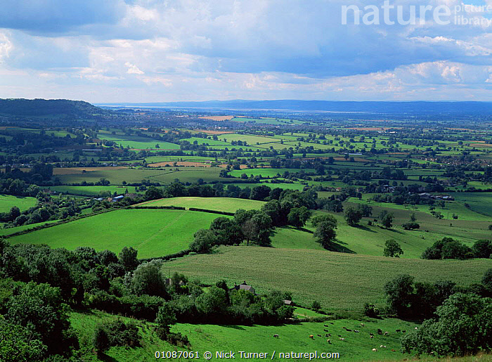View of farmland from Frocester Hill, Cotswolds, Gloucestershire, UK  ,  COUNTRYSIDE,ENGLAND,FARMLAND,FIELDS,HEDGEROWS,HORIZONTAL,UK,Europe,United Kingdom,British  ,  Nick Turner