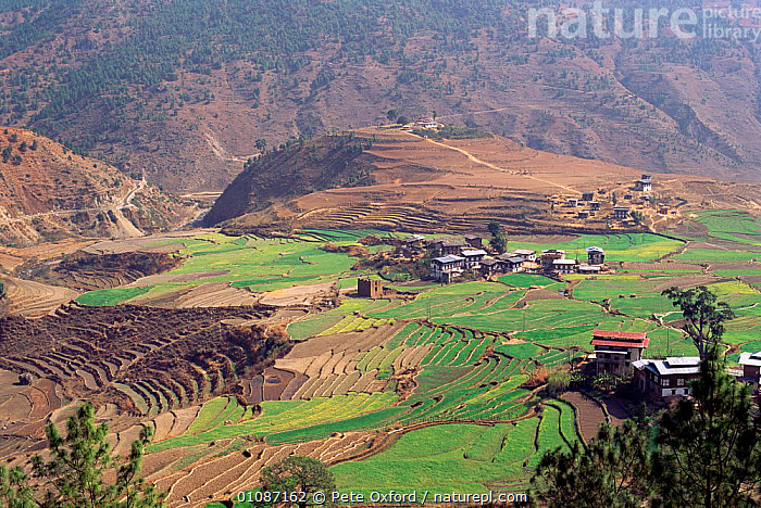 Village with terraced fields Punakha valley, Bhutan  ,  AGRICULTURE,BUILDINGS,FARMLAND,HORIZONTAL,LANDSCAPES,MOUNTAINS,PETER,TERRACES,VILLAGES,INDIAN-SUBCONTINENT,Asia  ,  Pete Oxford