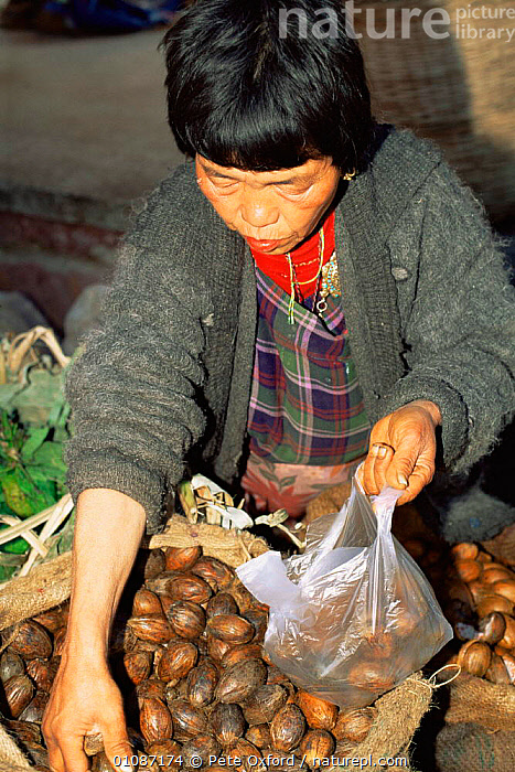 Woman selling Betel nuts, Thimpu market, Bhutan 2001  ,  ASIA,FRUIT,Market,PEOPLE,TRADE,VERTICAL,Plants,INDIAN-SUBCONTINENT  ,  Pete Oxford