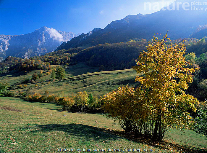Pandebano, Picos de Europa national park, Cantabrian mountains, Asturias, Spain  ,  EUROPE,HIGHLANDS,HORIZONTAL,LANDSCAPES,MEADOWLAND,MOUNTAINS,NP,RESERVE,SPAIN,Grassland,National Park  ,  Juan Manuel Borrero