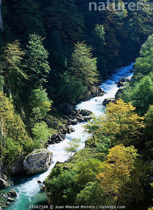 Looking down on Cares river at the start of autumn, Picos de Europa NP, Cantabrian mountains, Leon, Spain  ,  AUTUMN,BROADLEAF,EUROPE,HIGHLANDS,LANDSCAPES,MOUNTAINS,NP,rapids,RESERVE,SPAIN,VERTICAL,National Park  ,  Juan Manuel Borrero