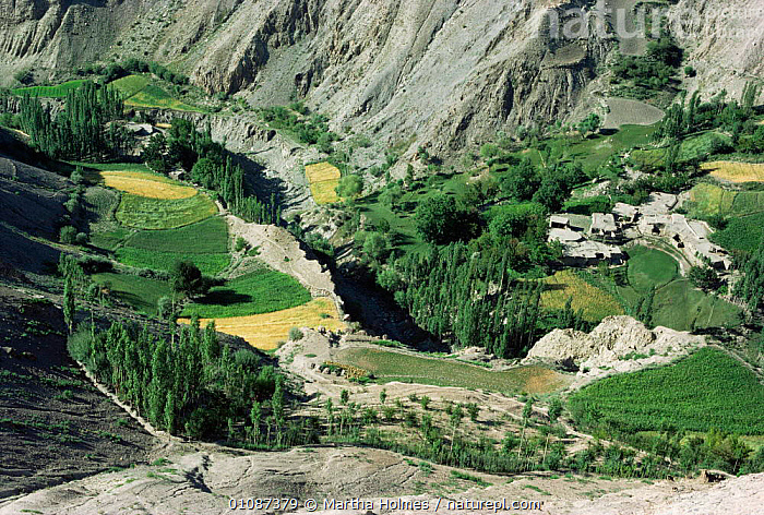Looking down on village and terraced fields in valley, Hindu Kush, Pakistan  ,  AGRICULTURE,ASIA,LANDSCAPES,MOUNTAINS,terraces,valley,villages,INDIAN-SUBCONTINENT  ,  Martha Holmes