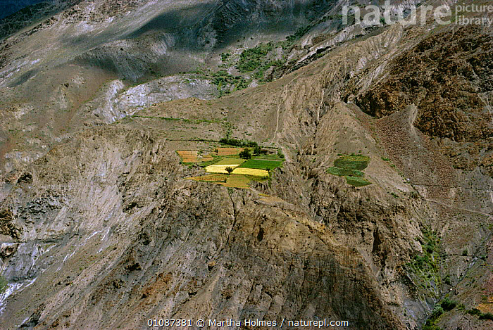Terraced fields on patch of flat land in Hindu Kush mountains. Pakistan  ,  TERRACES,CULTIVATION,LANDSCAPES,MOUNTAINS,VILLAGES,AGRICULTURE,AERIAL ,AERIALS,Asia,INDIAN-SUBCONTINENT  ,  Martha Holmes