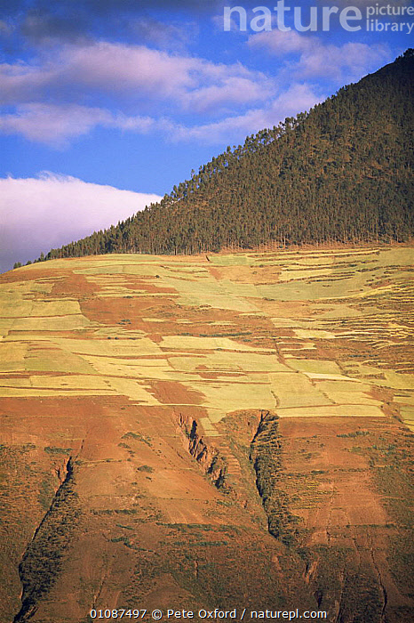 Cultivated fields landscape above eroded hillsides (part of erosion due to deforestation of hillsides to make way for crops), Urubamba Valley, Peru, South America  ,  AGRICULTURE,CLIFFS,CULTIVATED,DEFORESTATION,EROSION,FARMING,FARMLAND,GEOLOGY,HIGHLANDS,LAND MANAGEMENT,LANDSCAPES,ROCKS,SOUTH AMERICA,VERTICAL,SOUTH-AMERICA  ,  Pete Oxford