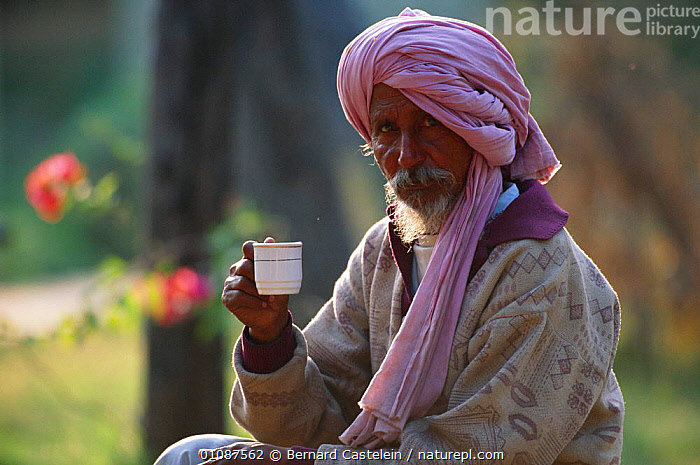Tonga driver drinking cup of chai (tea) Keoladeo Ghana NP, Bharatpur, Rajasthan, India  ,  ASIA,BHARATPUR,CASTELEIN,CULTURES,CUP,DRINKING,DRIVER,HORIZONTAL,INDIAN SUBCONTINENT,KEOLADEO,MALES,MAN,NATIONAL PARK,NP,ONE,PEOPLE,PORTRAIT,PORTRAITS,TEA,TRADITIONAL,TURBAN,INDIAN-SUBCONTINENT,INDIA,,UNESCO World Heritage Site,  ,  Bernard Castelein