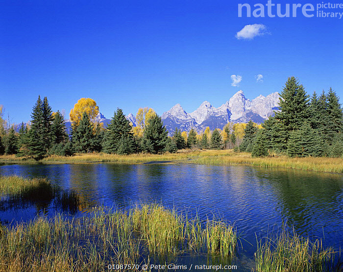 Snake river and autumn woodland, with Grand Tetons behind, Grand Teton NP, Wyoming, USA  ,  AUTUMN,LANDSCAPES,MOUNTAINS,NORTH AMERICA,NP,RANGES,RESERVE,RIVERS,USA,WATER,National Park ,Rocky Mountains,  ,  Pete Cairns
