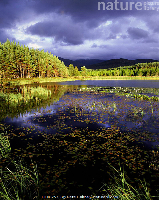 Lochan in pine forest with storm clouds, Strathspey, Highlands, Scotland, UK  ,  ATMOSPHERIC,BRITISH,CLOUDS,EUROPE,KABDSCAOE,LAKE,LAKES,LANDSCAPES,LOCH,PCA,SCENIC,STORM,STORMS,UK,UNITED KINGDOM,VERTICAL,WEATHER,WETLANDS,SCOTLAND, United Kingdom, United Kingdom, United Kingdom, United Kingdom, United Kingdom, United Kingdom  ,  Pete Cairns